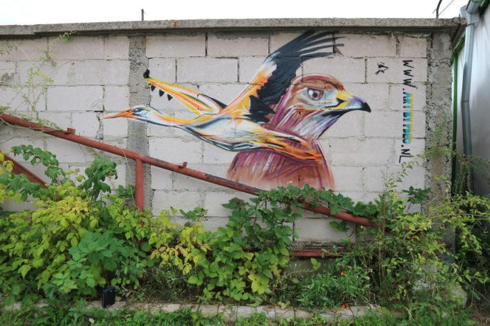 Bird themed streetart at a campsite in Sofia.